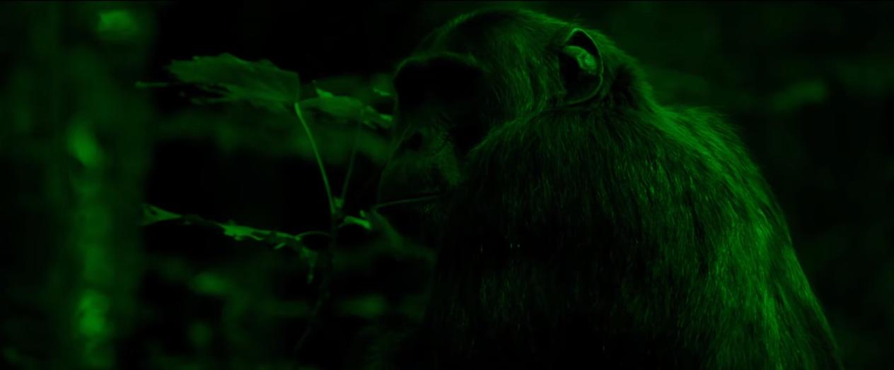 Clip rap francais mani deiz le feu des singes shoptonhiphop